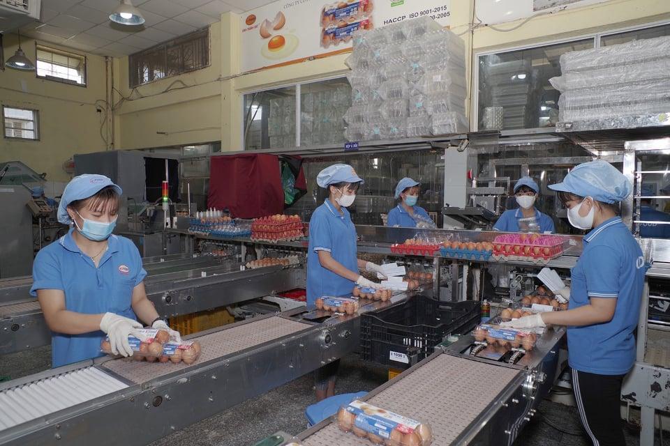 Công nhân đang đóng gói trứng tại Công ty thực phẩm Vĩnh Thành Đạt. Ảnh: Vĩnh Thành Đạt.