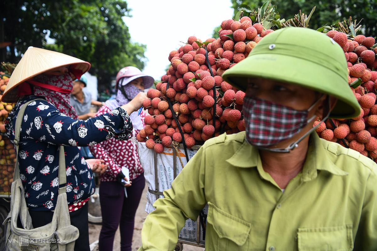 Các thương lái thu mua vải tại huyện Lục Ngạn (Bắc Giang) trong mùa vụ vải năm 2020. Ảnh: Giang Huy