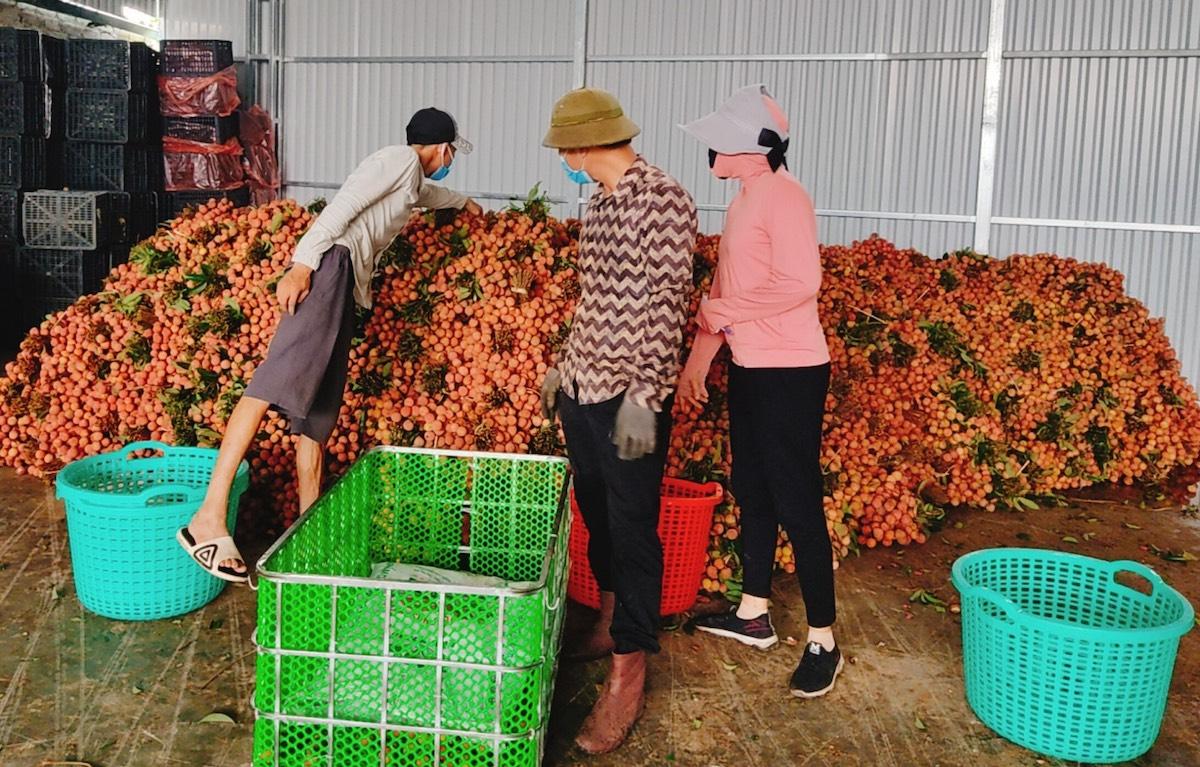 Nông dân Lục Ngạn (Bắc Giang) đóng hàng chuẩn bị vận chuyển, tiêu thụ. Ảnh: Thế Trường