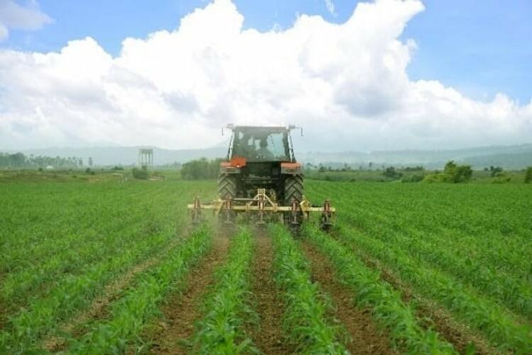 Cánh đồng yến mạch, bắp hữu cơ tại Trang trại bò sữa Lao- Jagro tại Xiêng Khoảng (Lào), ảnh chụp tháng 5/2021.