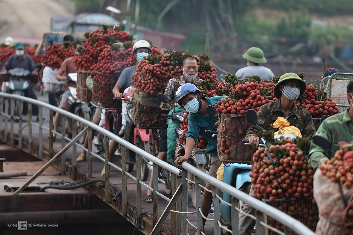 Nông dân Bắc Giang chở vải thiều đến điểm cân. Ảnh: Ngọc Thành