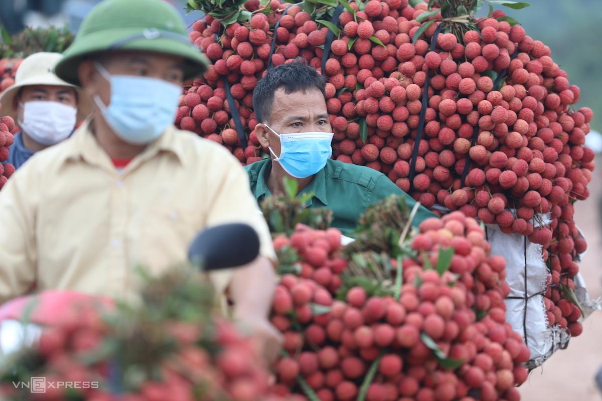 Nông dân huyện Lục Ngạn (Bắc Giang) chở vải tới các điểm cân để tiêu thụ. Ảnh: Ngọc Thành