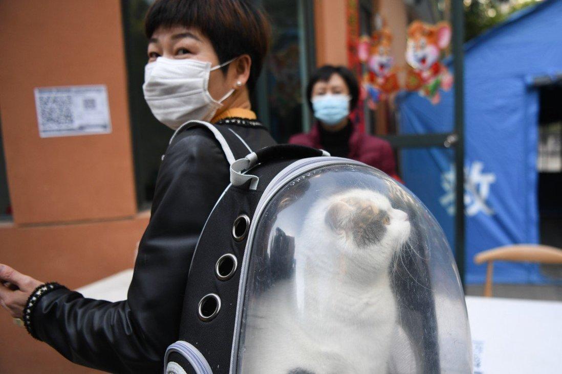 Người Trung Quốc đang có xu hướng sống một mình và nuôi thú cưng là sự lựa chọn tuyệt vời cho họ. Ảnh: South China Morning Post.