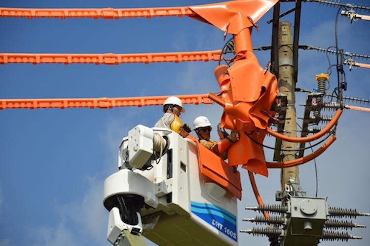 Công nhân điện lực TP HCM sửa chữa trên đường dây. Ảnh: Thành Nguyễn