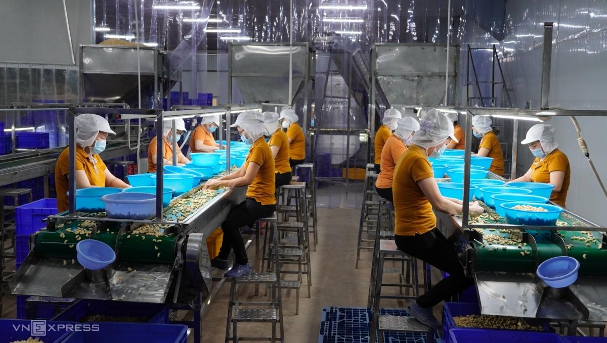 Xưởng làm việc tại nhà máy điều Long An, thuộc chi nhánh công ty cổ phần chế biến hàng xuất khẩu Long An, ngày 16/7. Ảnh: Hoàng Nam.