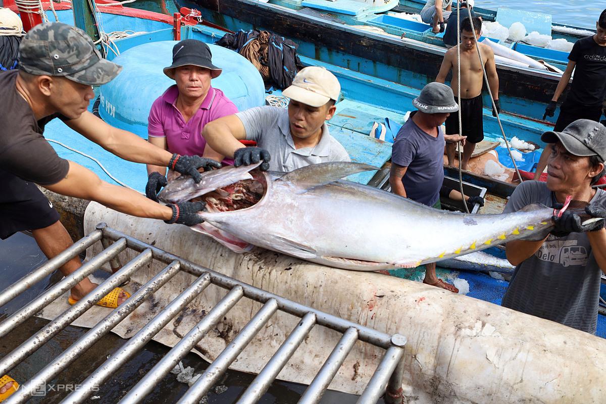 Cá ngừ đại dương được ngư dân đưa về cảng cá Hòn Rớ, TP Nha Trang, Khánh Hòa. Ảnh: Xuân Ngọc