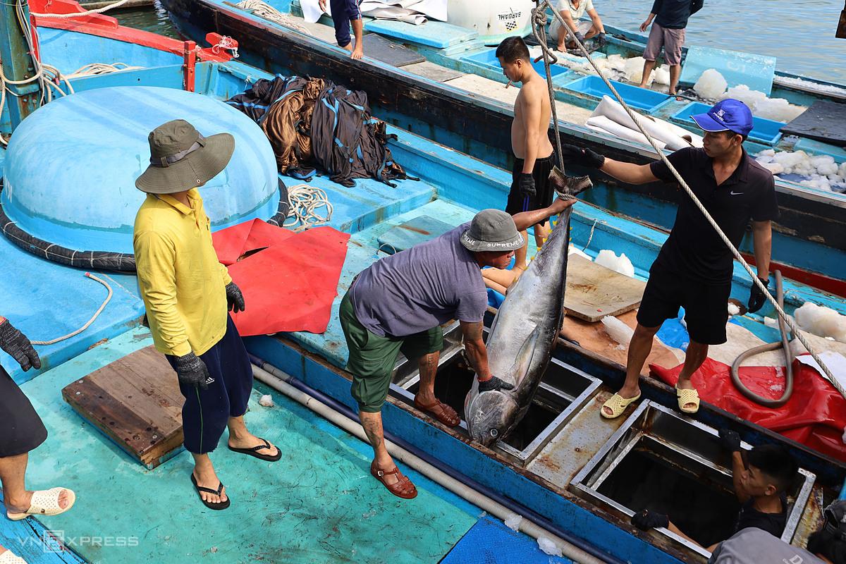 Cá ngừ đại dương được ngư dân đưa về cảng cá Hòn Rớ, TP Nha Trang, Khánh Hòa: Ảnh: Xuân Ngọc