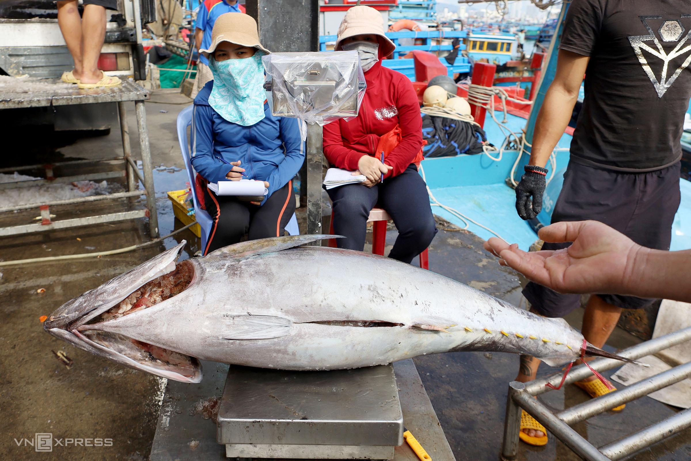 Cá ngừ đại dương được ngư dân đưa về cảng cá Hòn Rớ, TP Nha Trang, Khánh Hòa, ngày 23/1. Ảnh: Xuân Ngọc