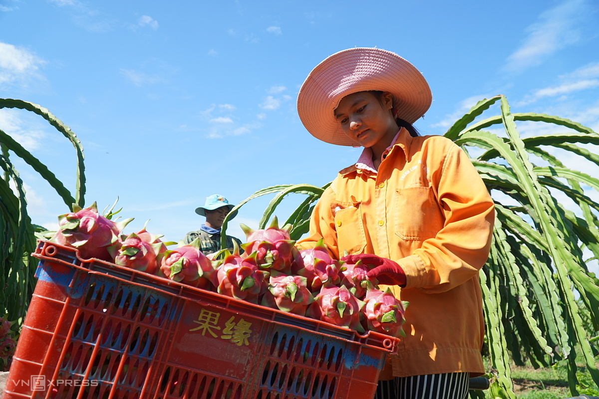 Rau quả Việt vào Hàn Quốc tăng
